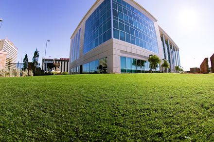 SynLawn SAC Commercial Application